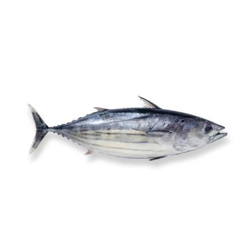 Atum - Peixe de Mar