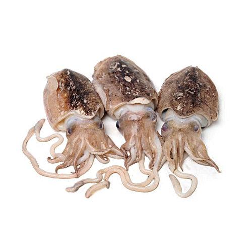 Choco - Cefalópodes