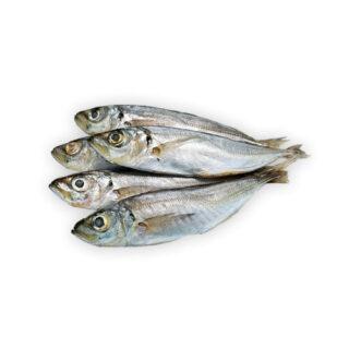 Jaquinzinhos - Peixe de Mar
