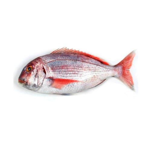 Pargo Legítimo - Peixe de Mar
