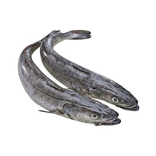Pescada - Peixe de Mar
