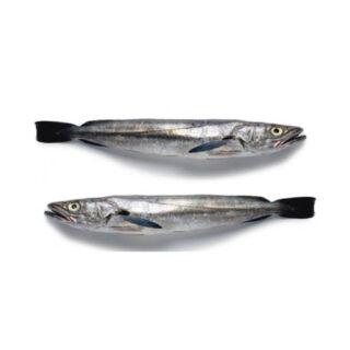 Pescadinha - Peixe de Mar
