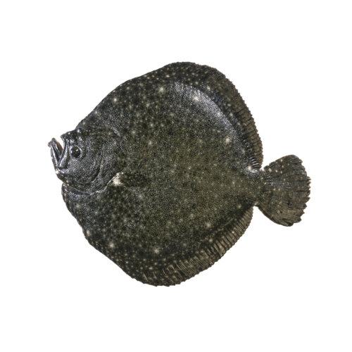 Pregado - Peixe de Mar