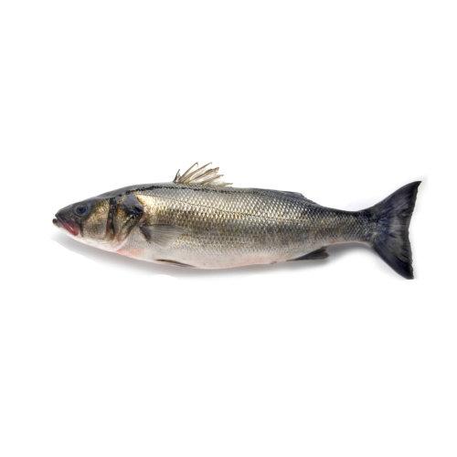 Robalo - Peixe de Mar