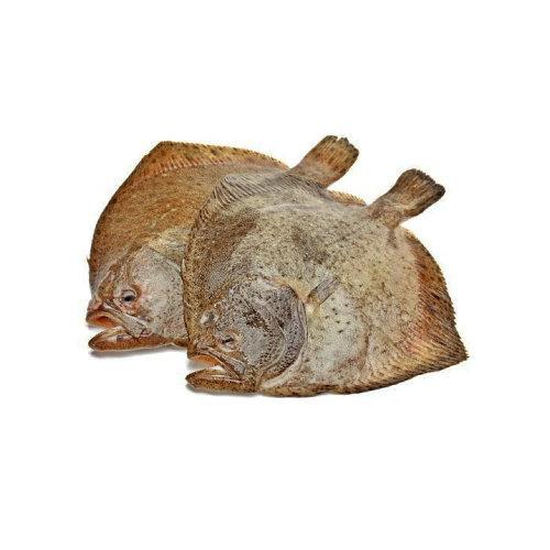 Pregado - Peixe de Aquicultura