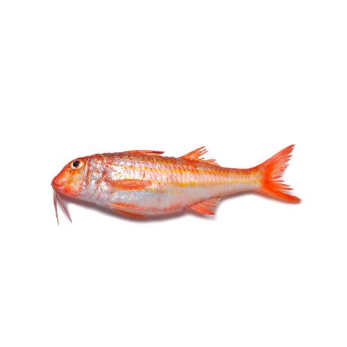 Salmonete - Peixe de Mar