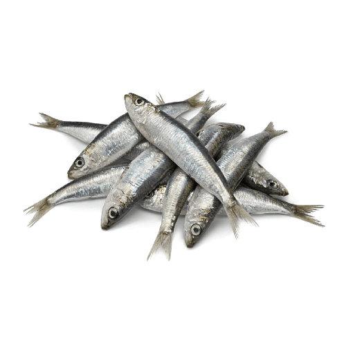 Sardinha - Peixe de Mar