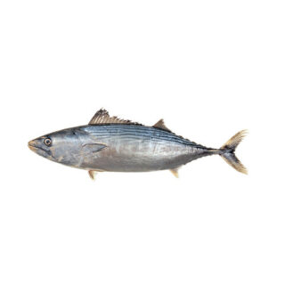 Sarrajão - Peixe de Mar
